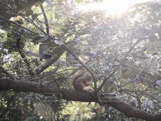 木の枝にリスの写真・画像素材[1639233]