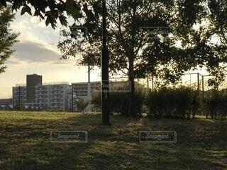 公園の夕暮れ時の写真・画像素材[1639234]
