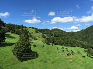 青い空と牧場と牛の写真・画像素材[1648749]