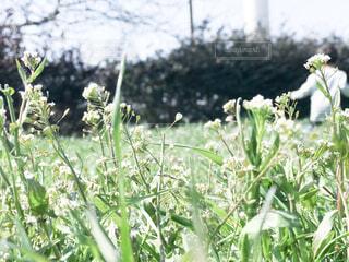 近くの花のアップの写真・画像素材[1855631]