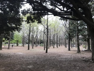 公園の写真・画像素材[2029835]