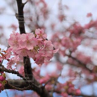 花のクローズアップの写真・画像素材[2282941]