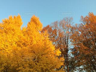 フォレスト内のツリーの写真・画像素材[1644575]