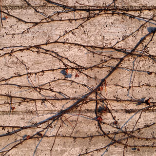 壁面の写真・画像素材[1644577]