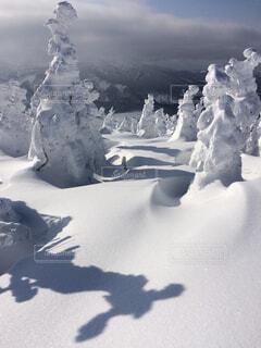 樹氷の写真・画像素材[1644648]