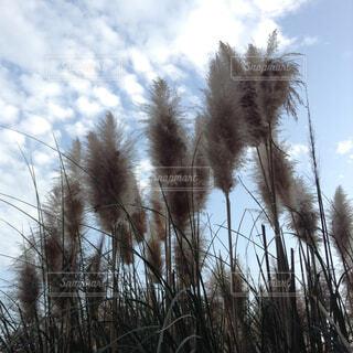 近くの植物のアップの写真・画像素材[1645663]