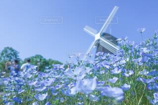 ネモフィラと風車の写真・画像素材[2099391]