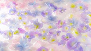明るい水に浮かぶ紫陽花の写真・画像素材[1642321]