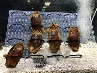サメの卵の写真・画像素材[1643394]