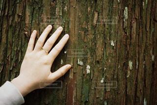 木を触る手の写真・画像素材[1661030]