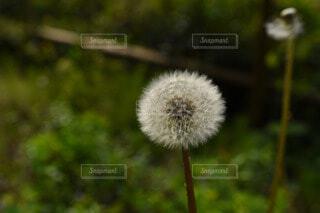 自然の写真・画像素材[59822]