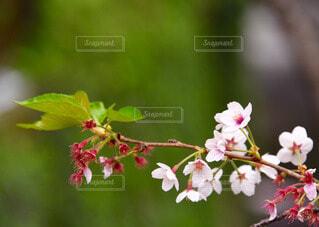 自然の写真・画像素材[63198]