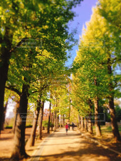 並木通りの写真・画像素材[1644066]
