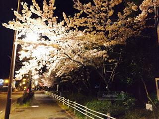桜 - No.56855