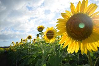 近くに黄色い花のアップの写真・画像素材[1669664]