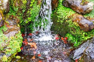 小さな滝の写真・画像素材[1661039]