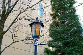 街灯と木と。の写真・画像素材[1681960]