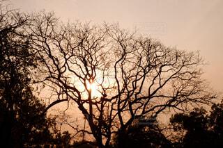 大きな木の写真・画像素材[2114917]