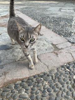 岩の上に座っている猫の写真・画像素材[2777519]