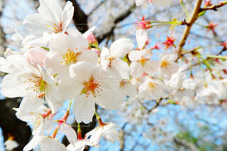 花のクローズアップの写真・画像素材[3071803]