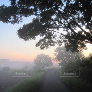 朝霧の写真・画像素材[1645744]