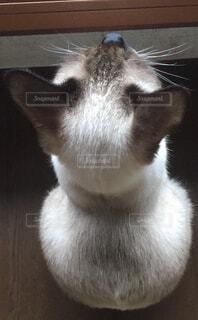 子猫の背中の写真・画像素材[1645747]
