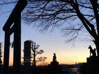 稲荷神社の朝の写真・画像素材[1645757]