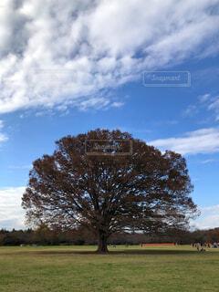 背景の木と大規模なグリーン フィールドの写真・画像素材[1645890]