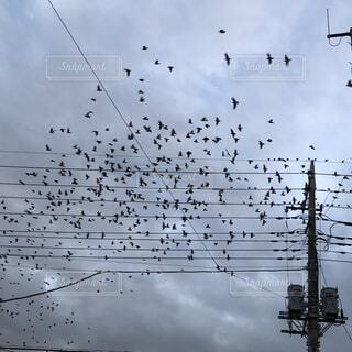 空を飛んでいる鳥の群れの写真・画像素材[1648193]