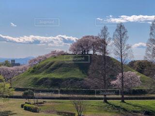 古墳と桜の写真・画像素材[2030841]
