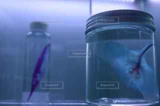 青いボトルの写真・画像素材[1648098]
