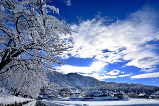 雪の中で山の木の写真・画像素材[1646751]