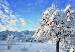 雪と柿の写真・画像素材[1647605]
