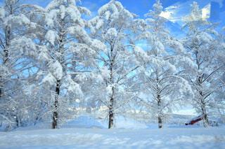 近く雪に覆われた木のアップの写真・画像素材[1647608]