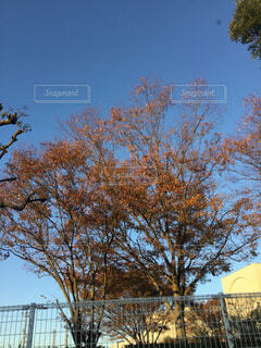 建物の前にツリーの写真・画像素材[1647051]