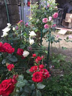 うちの庭の写真・画像素材[1648584]