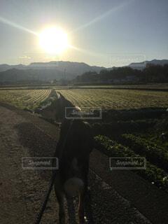 元日の散歩の写真・画像素材[1698173]