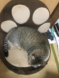 肉球座椅子で眠るネコの写真・画像素材[2277769]