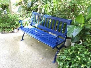 青いベンチの写真・画像素材[1647148]