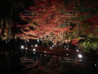 池に映る紅葉の写真・画像素材[1659895]