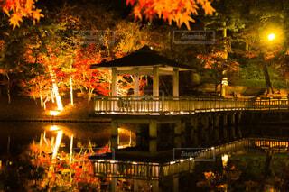 夜の紅葉の写真・画像素材[1654360]