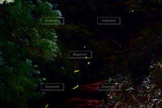 蛍の通り道の写真・画像素材[1654412]