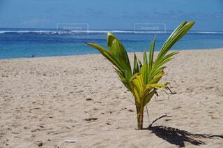 砂浜の上に座って傘の写真・画像素材[1649611]