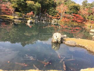 池に反射する秋の風景の写真・画像素材[1649577]