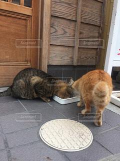 食事中の猫の写真・画像素材[1649643]