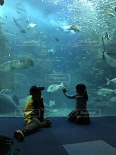 水族館の写真・画像素材[1653769]