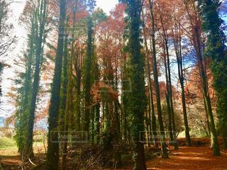 木漏れ日の写真・画像素材[1655368]