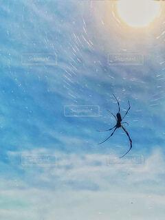 クモ、クモの糸、太陽🕷🕸🌞の写真・画像素材[2853662]