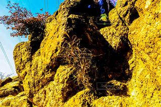 岩の写真・画像素材[1652857]