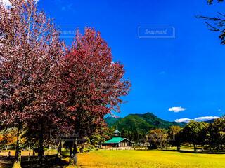 公園の大きな木の写真・画像素材[1652865]
